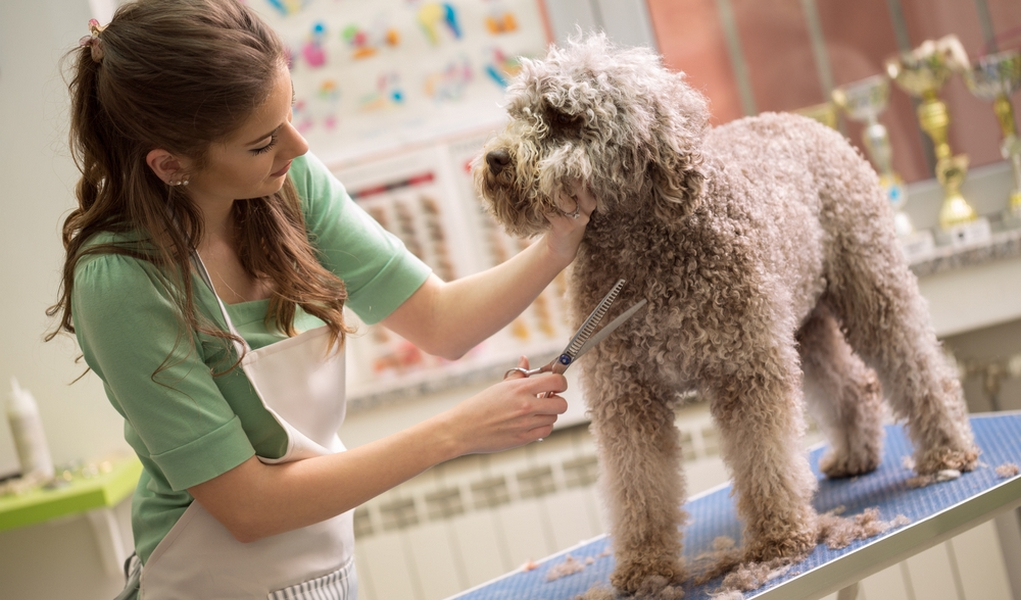 Where-To-Begin-Your-Career-As-A-Pet-Groomer